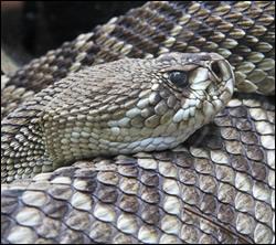 Snake control in Shepherdsville